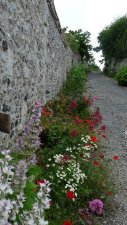Paths in the old town, planted up by 'The Herbarium'