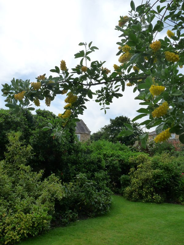 The pineapple tree in the walled garden.