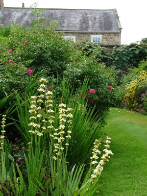 The walled garden - looking towards the house.