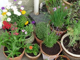 The only part of the garden that's truly ours. A few pots of herbs and flowers outside the door.