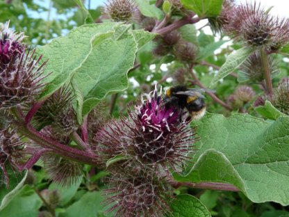 A busy bee.