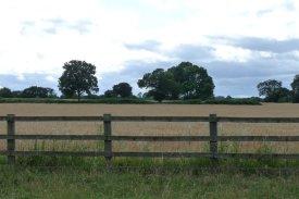 Mid-summer farmland.