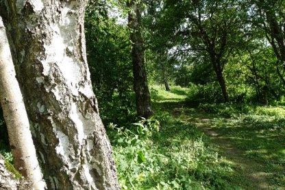 A woodland path.
