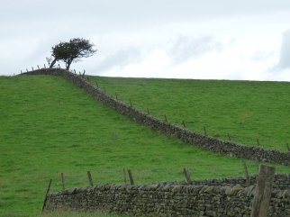 Looking across Nidderdale.