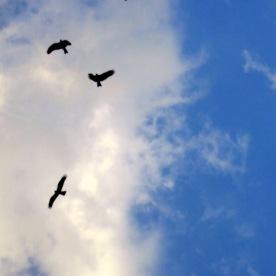 Eagles fly above Bangalore