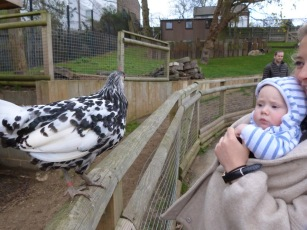 And a hen meets William.