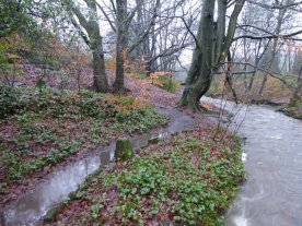 Quiz question. Which is the path, and which the brook?
