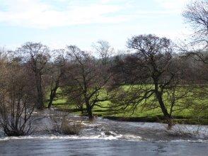 Trees paddling.