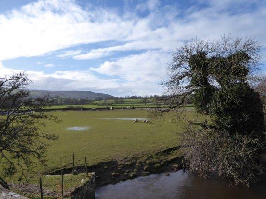 Sheep in soggy fields.