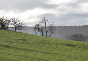 Misty fields.