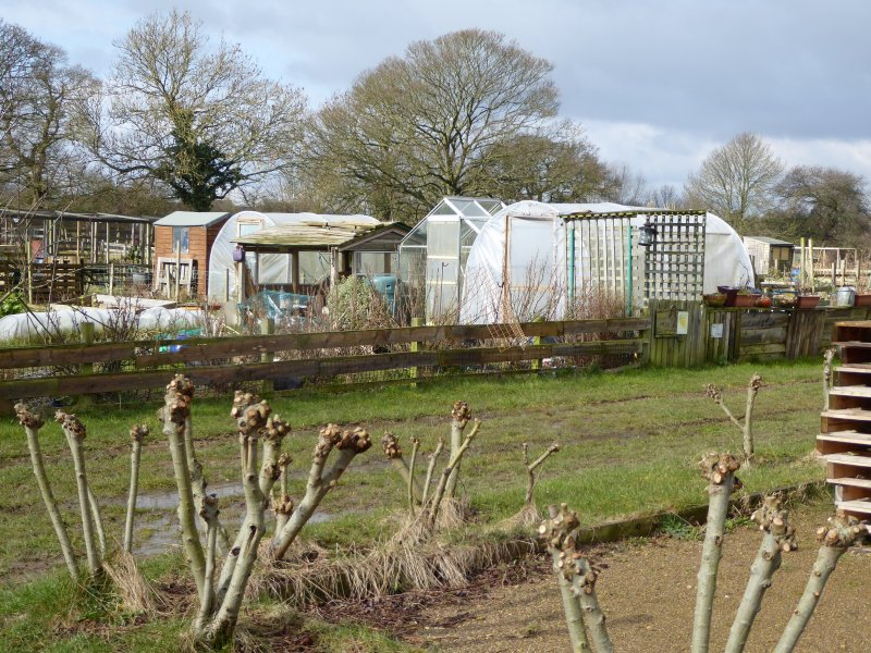 AllotmentsBoroughbridgeMarch2016 013