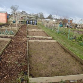 AllotmentsBoroughbridgeMarch2016 014