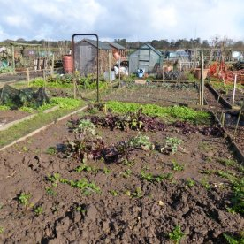 AllotmentsBoroughbridgeMarch2016 018
