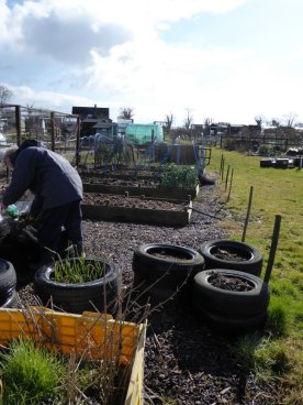 AllotmentsBoroughbridgeMarch2016 026