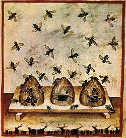 Beekeeping, tacuinum sanitatis casanatensis (14th century) (Wikimedia commons)