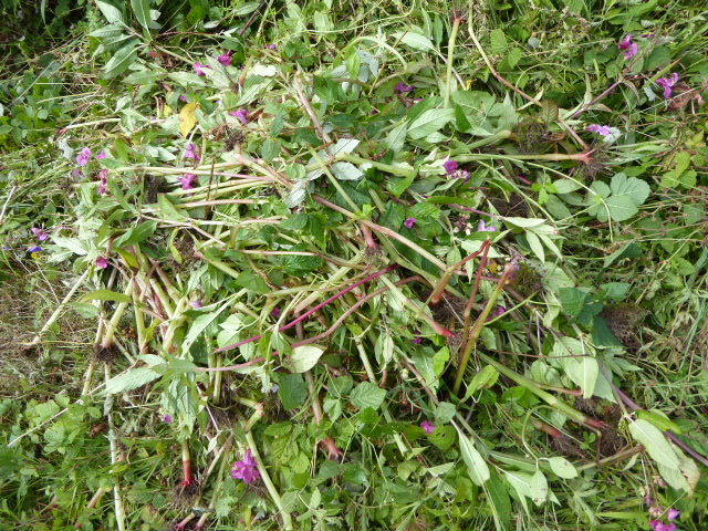 The best Himalayan Balsam is dead Himalayan Balsam.