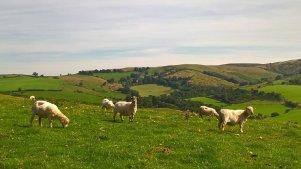Shropshire4