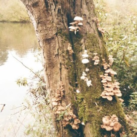 A fungus-colonised tree near the lake.