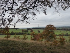 A view of Emley Moor transmitting tower from the woods.