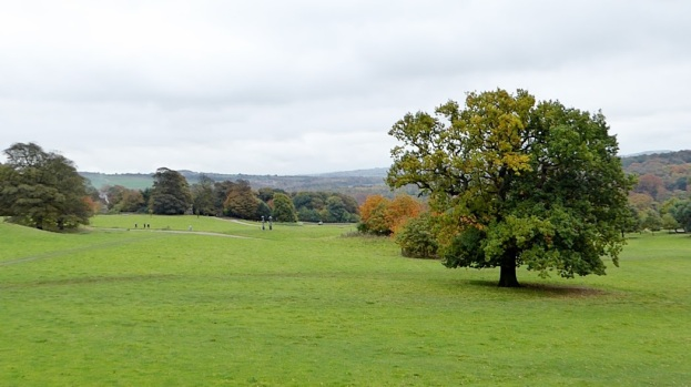Parkland at YSP with distant sculpture.