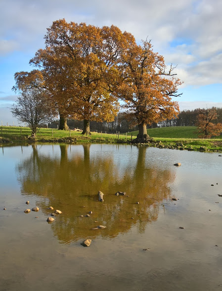 Sunshine after rain at Studley Royal