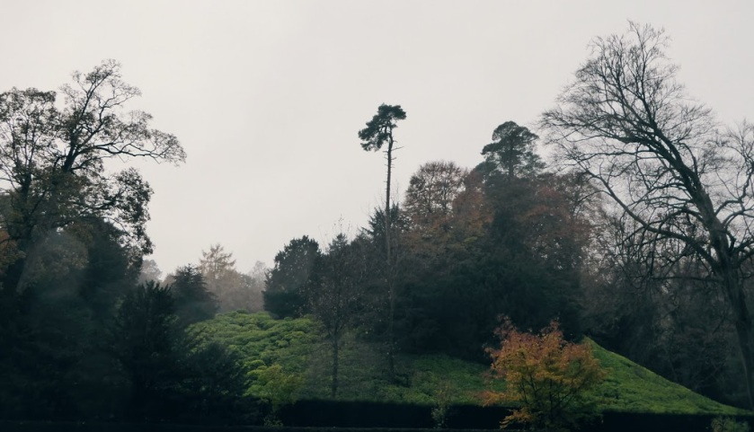 The woodland surrounding Studley Royal.