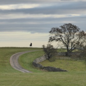 horse-on-the-gallops