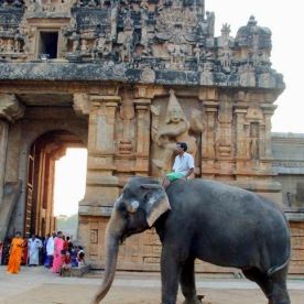 Temple elephant, Thanjavur