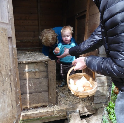 William's collecting eggs....