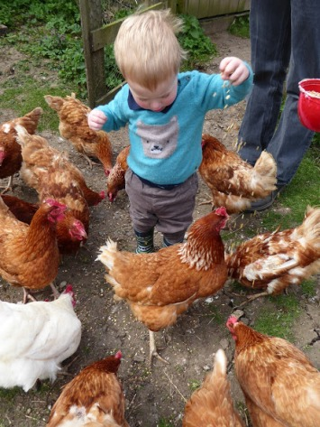 .... and feeding the hens.