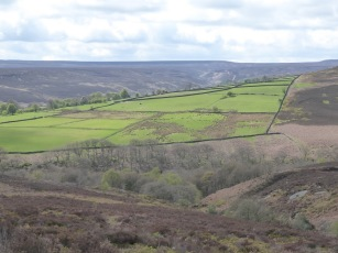 A patchwork of fields near Ellingstring and Slipstone Crags.