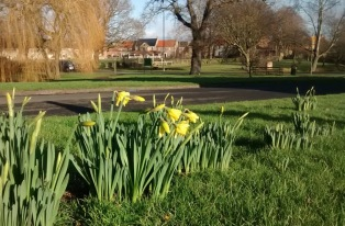 We've already seen our first daffodils in North Stainley this year.