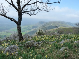 Springtime in the Dolomies, near Foix.