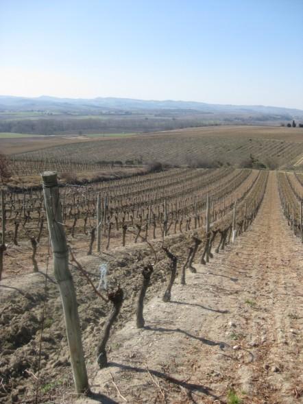 Walking in the Aude, there were vineyards, always vineyards.