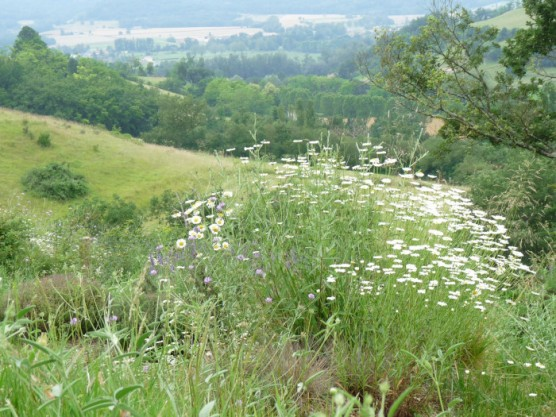 Tabariane, near Mirepoix.