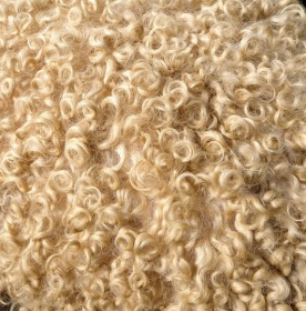 .... wool ....