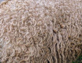 .... and more wool.