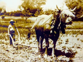 More ploughing. Love the head gear!
