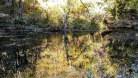 And a deliberately impressionistic take on the trees reflected in the water.