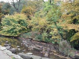 ..the autumn colours near the riverside.