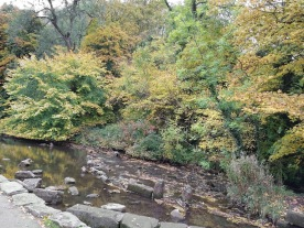 ..the autumn colours near the riverside.