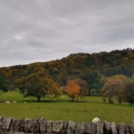 Autumn colour again
