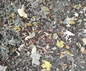 It's definitely autumn .....