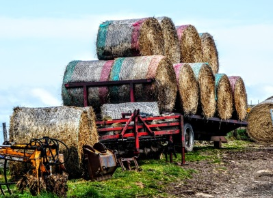 Bales of hay cut out the wind.