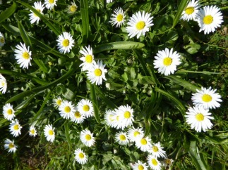 Daisies. Of course.