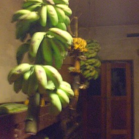 Bananas in the pantry