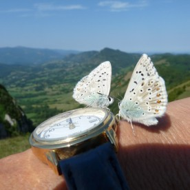 Dancing butterflies at Montsegur.