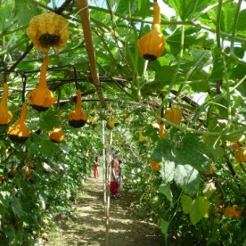 Wandering through the gourd tunnel.