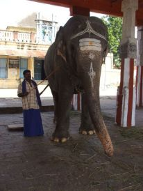 A blessing from the temple elephant.