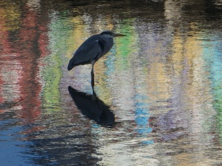 A heron in Cordoba, March.